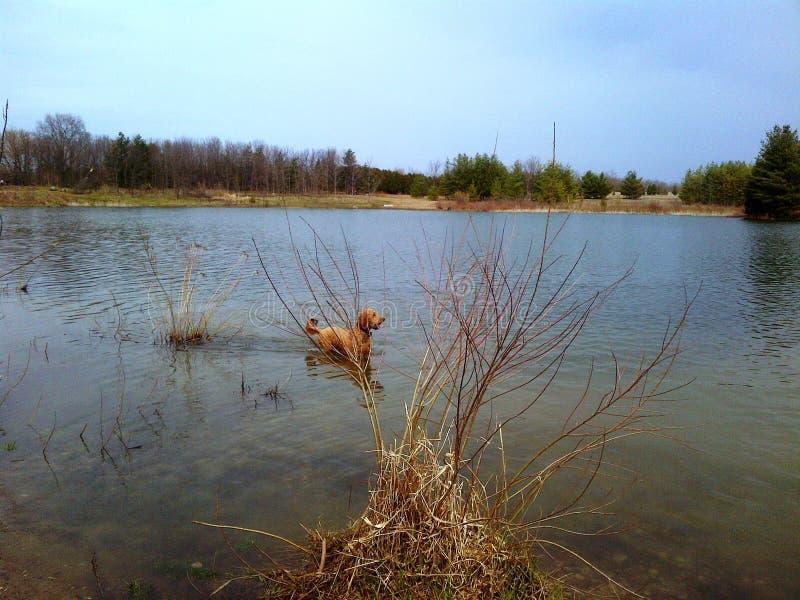 Nuotata di primavera immagine stock libera da diritti