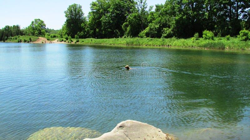 Nuotata di rinfresco immagini stock