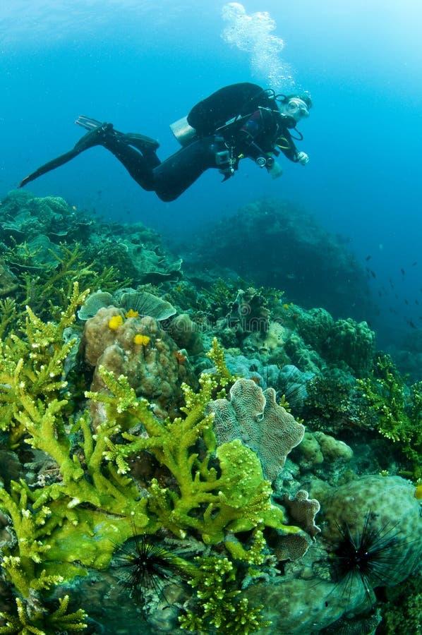 Nuoto dell'operatore subacqueo di scuba della donna in acqua blu libera fotografia stock libera da diritti