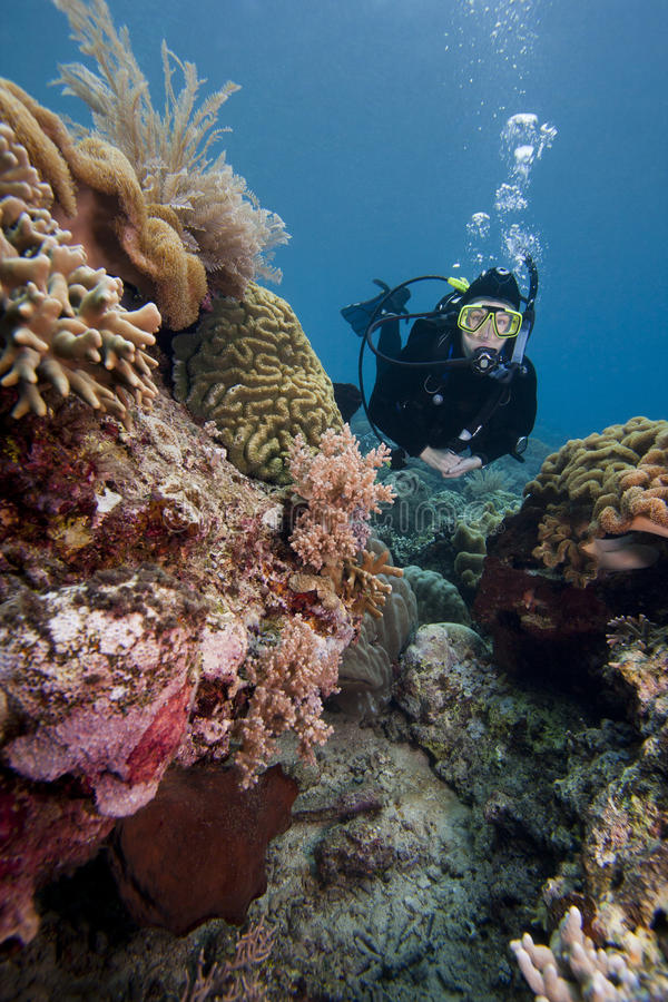 Nuoto dell'operatore subacqueo di scuba sopra una barriera corallina tropicale fotografie stock