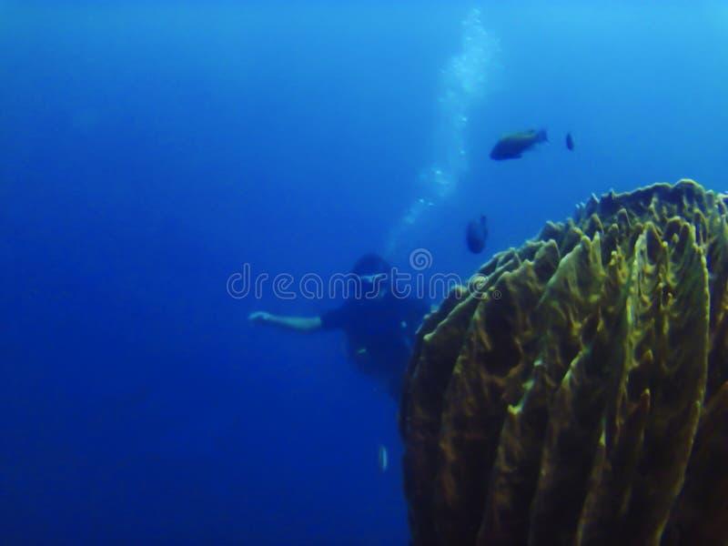 Nuoto dell'operatore subacqueo verso un corallo a Amed, sito d'immersione della nave incavata, Bali, Indonesia fotografie stock