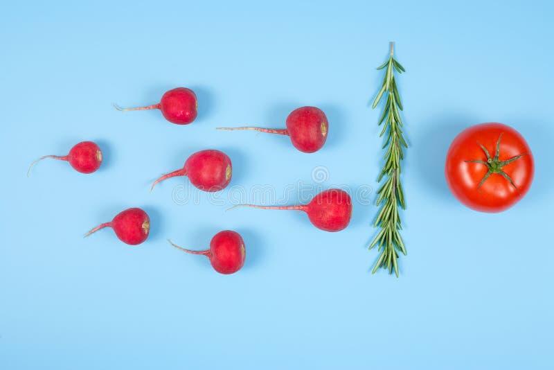 Nuoto dello spermatozoo verso l'uovo isolato su fondo blu Sperma umano, ravanello rosso cremisi, rosmarini e pomodoro rosso fotografia stock