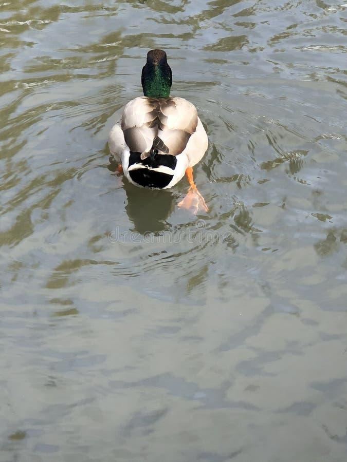 Nuoto via fotografie stock libere da diritti
