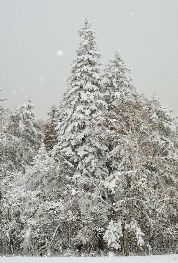 Nuova neve fotografia stock