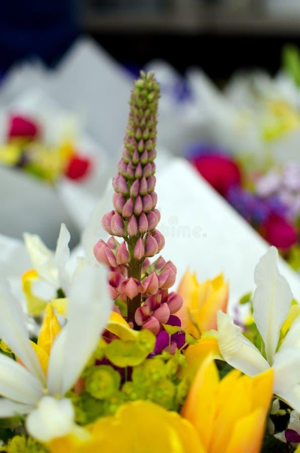 Nuova stagione dei fiori al mercato dell'agricoltore di Redmond fotografia stock