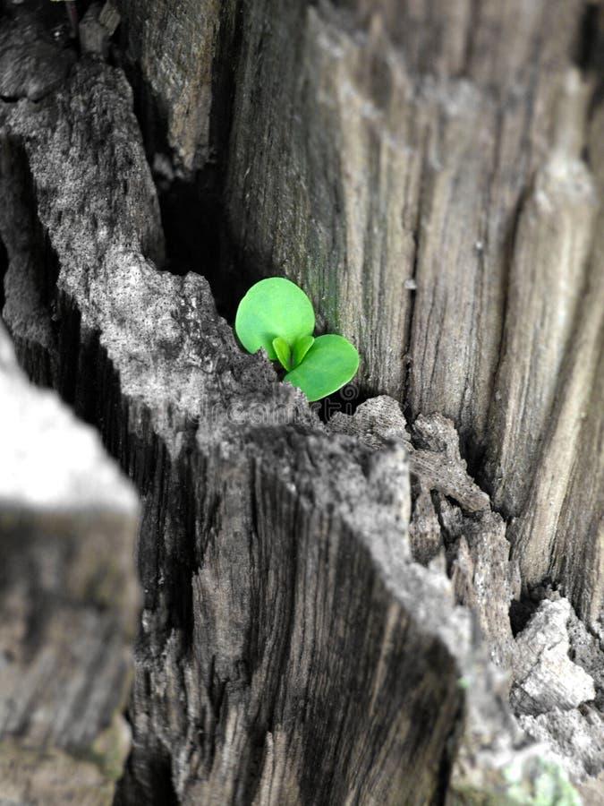 Nuova vita - speranza immagine stock