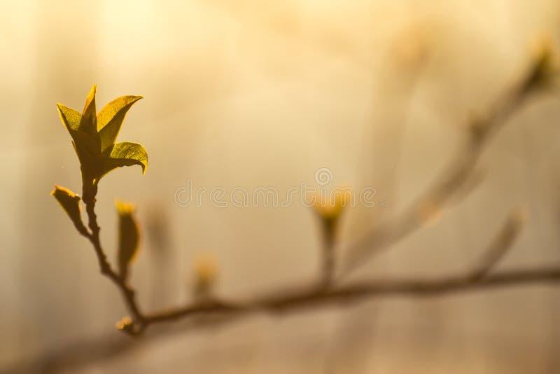 Nuove foglie in primavera immagine stock libera da diritti