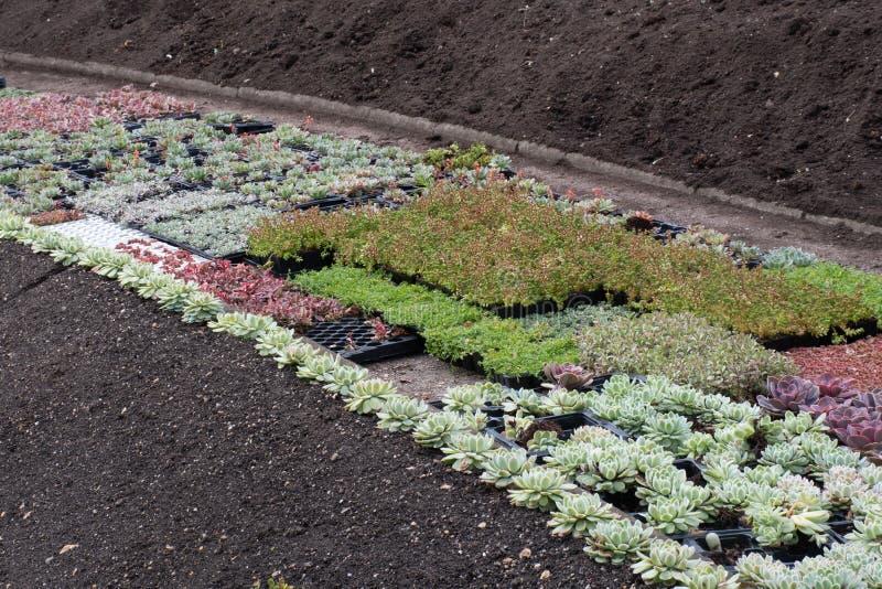 Nuove piante da letto pronte per la piantagione fotografie stock