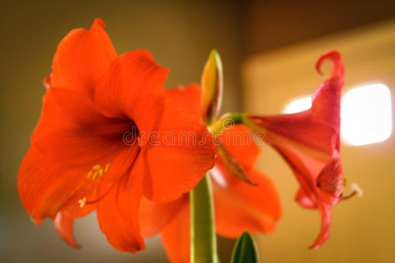 Nuovi anni di fiori immagini stock libere da diritti
