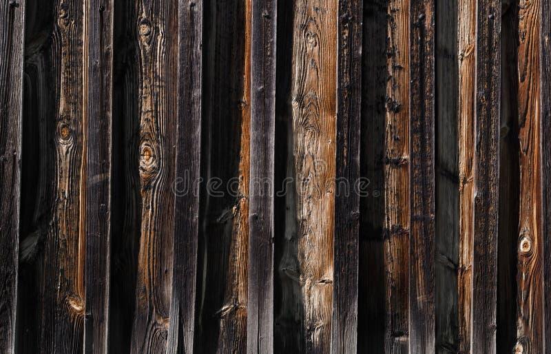 nuovi bordi di legno scuri sui bordi con i fungino di malattia fotografia stock
