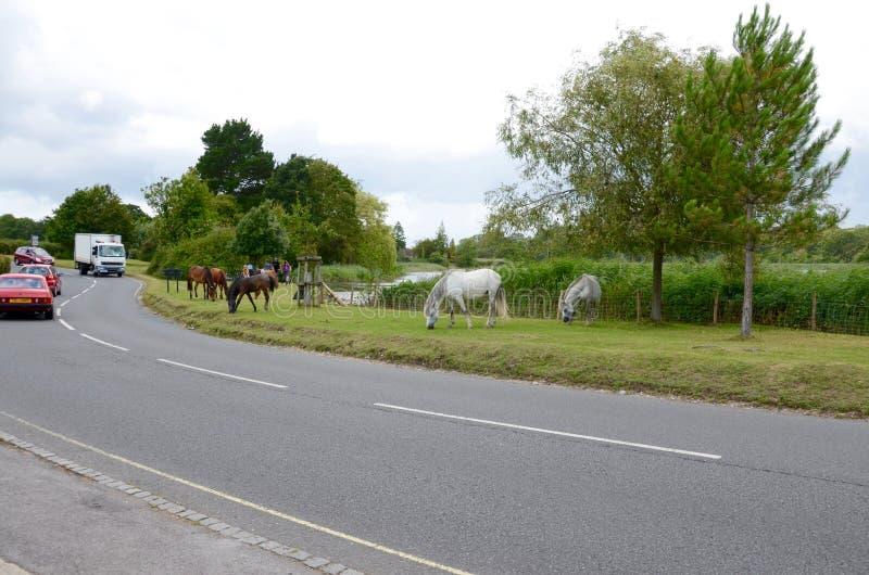 Nuovi cavallini della foresta nel Hampshire fotografia stock libera da diritti