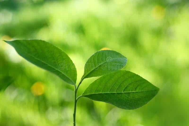 Nuovo albero. Nuova vita. immagini stock libere da diritti