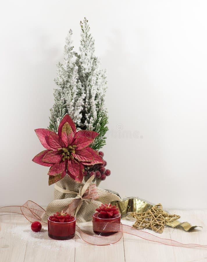 Nuovo anno, carta di festa di Natale Il Natale fiorisce la stella di Natale, rami dell'albero di Natale con la decorazione immagini stock
