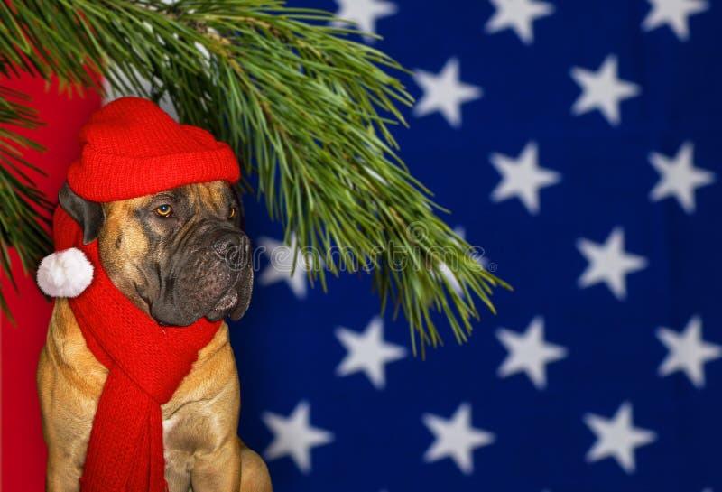 Nuovo anno, Natale, Santa Claus durante l'anno del cane sui precedenti della bandiera degli Stati Uniti Ritratto del primo piano  fotografie stock