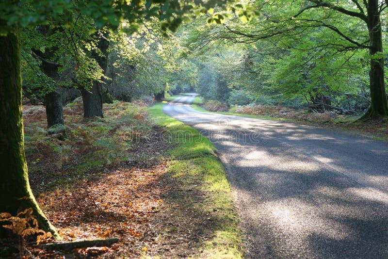 Nuovo azionamento della foresta in autunno fotografia stock