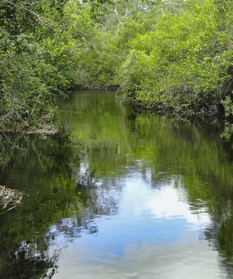 Nuovo fiume a Belize immagini stock