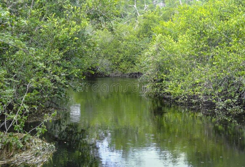 Nuovo fiume a Belize fotografie stock
