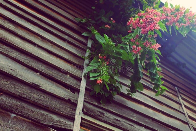 Nuovo villaggio della Malesia fotografia stock