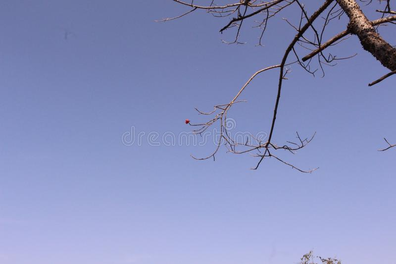Nur Blume im Himmelhintergrund lizenzfreies stockbild