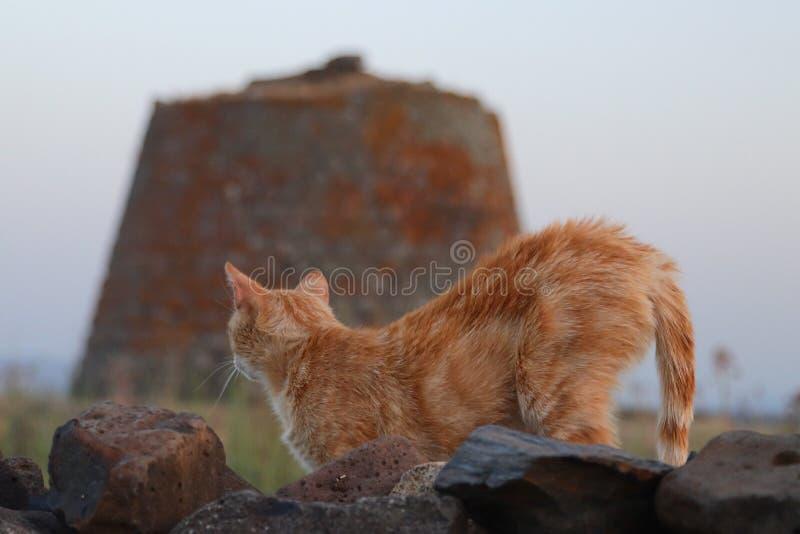 Nuraghe och katt royaltyfri foto