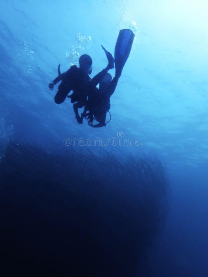 Nurek i scool barracuda, Sipadan wyspa borneo obraz stock