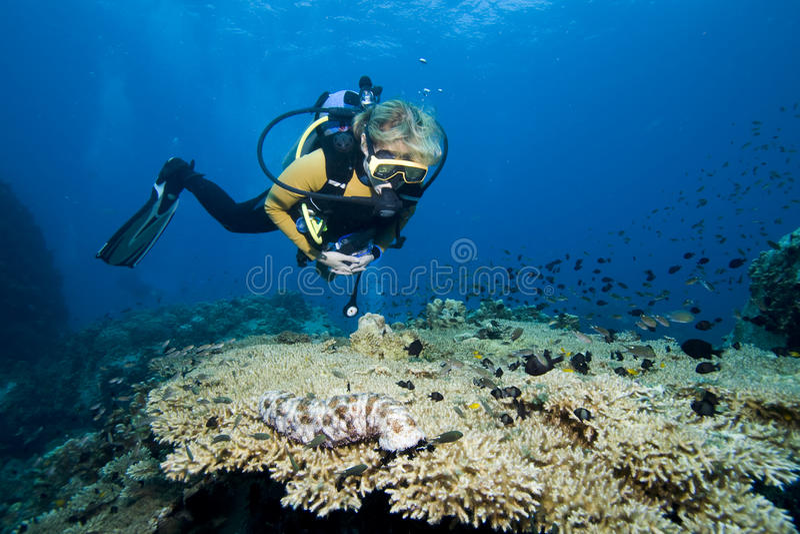 nurek koralowa kobieta obraz stock