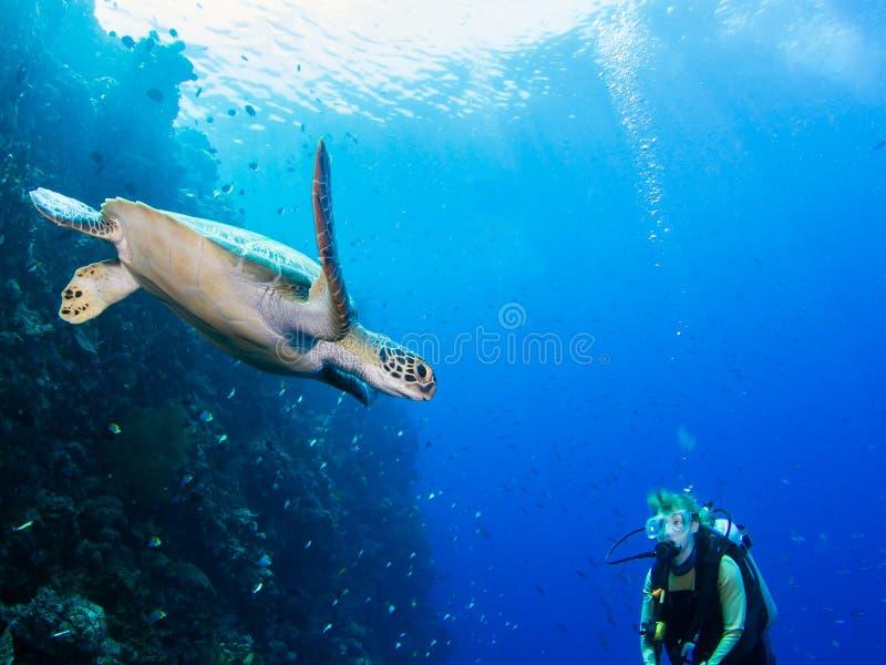 Nurek spotyka żółwia fotografia stock