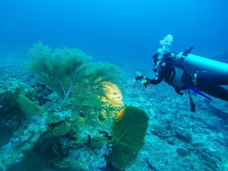 Nurka pływanie nad skałą zdjęcie stock
