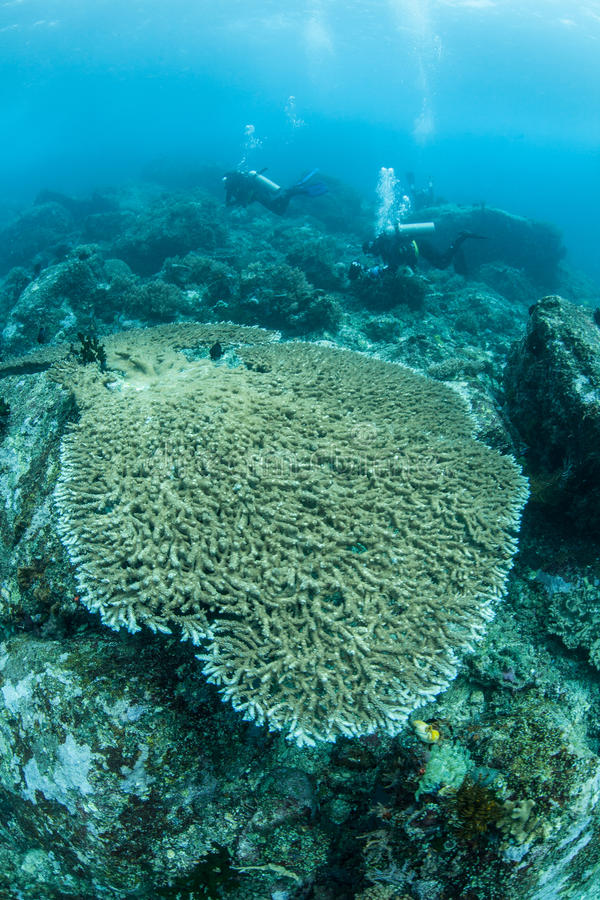 Nurkowie i Pacyficzna rafa koralowa zdjęcie royalty free