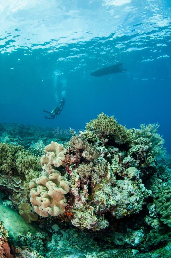 Nurkowie, pieczarkowy rzemienny koral w Bandzie, Indonezja podwodna fotografia obrazy royalty free