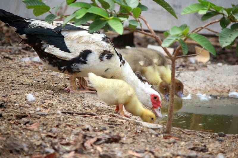 Nurkuje rodzinnej mamy i dziecka w wieś stylu zdjęcie stock