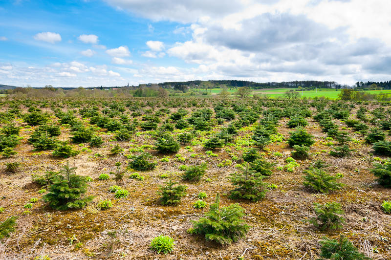 Download Nursery Garden stock image. Image of agriculture, forest - 25053955