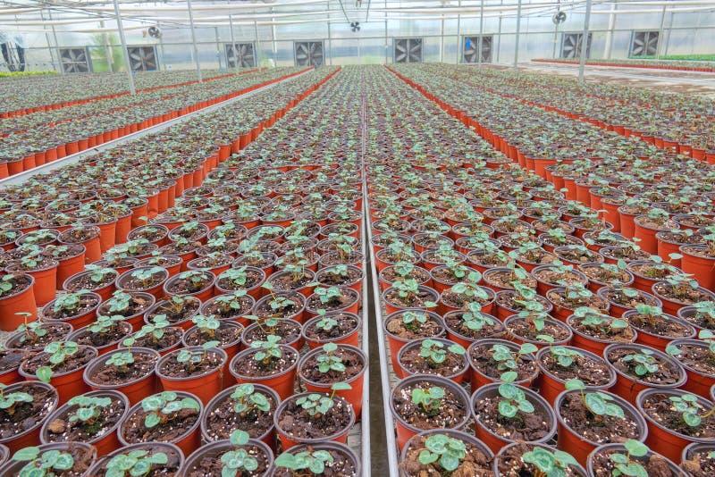 Nursery Greenhouse stock photo