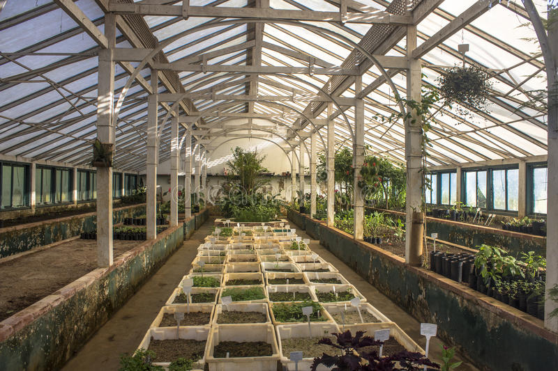 Nursery. Inside of Nursery, location for the cultivation of seedlings of various types and varieties of plants, belonging to City Hall in Sao Paulo, SP stock photography