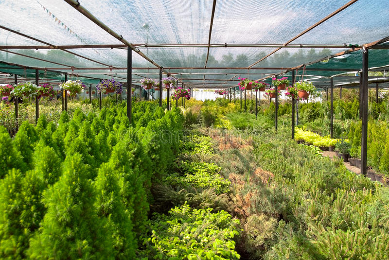 Download The nursery of plant stock image. Image of tree, shop - 23556589