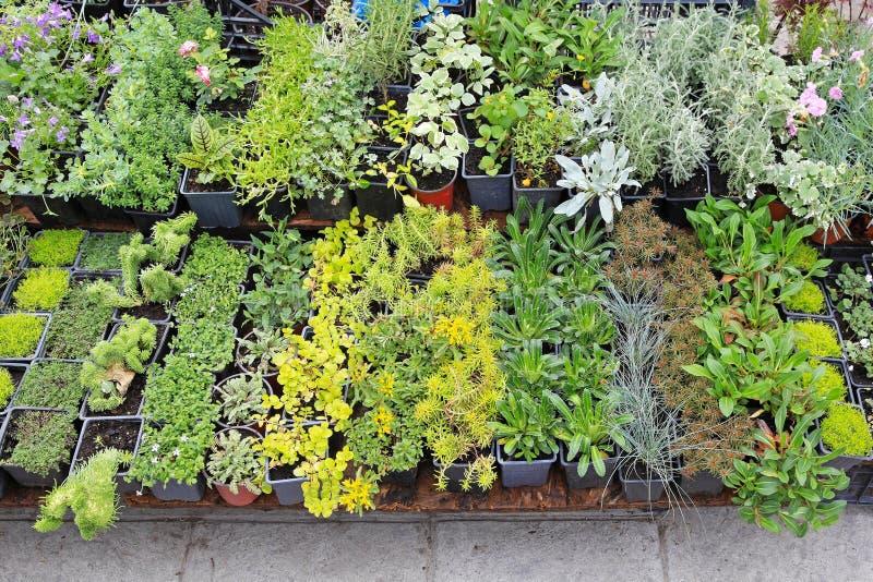 Nursery Plants Royalty Free Stock Image