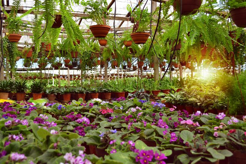 Nursery Station Flower Producer. Colorful flowers royalty free stock photo
