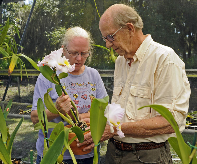 Nursery worker explains flower care. A female worker at an orchid nursery explains to the buyer how to care for the new flowering orchid plant royalty free stock photos