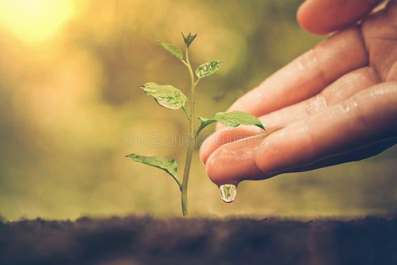 Nurturing baby plant royalty free stock photos