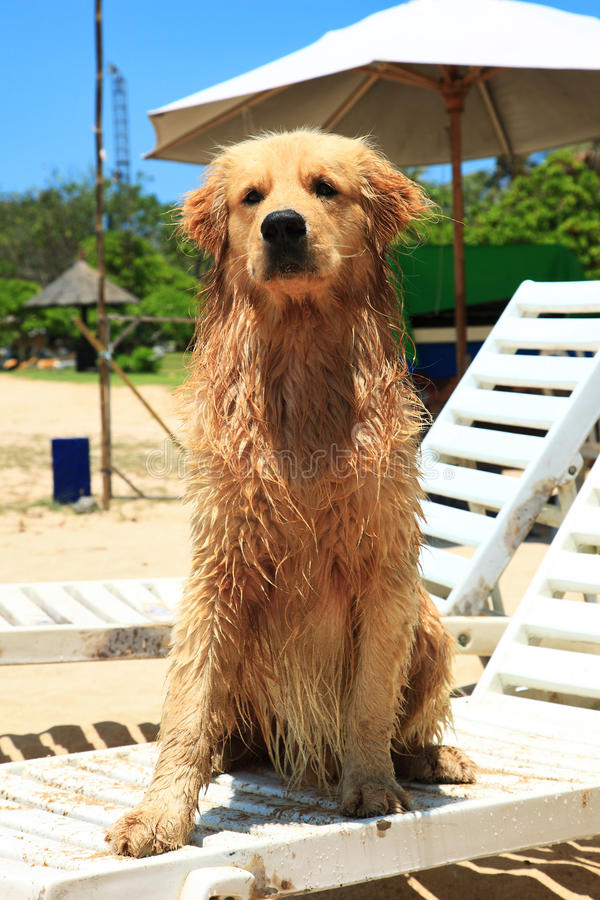 nusa dua σκυλιών παραλιών στοκ εικόνες