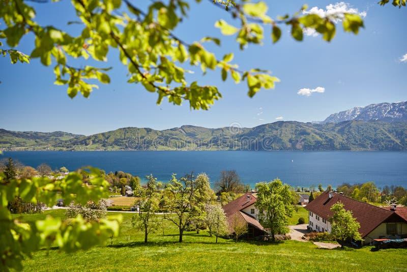 Nussdorf на озере Attersee с лугами и горами стоковые фото