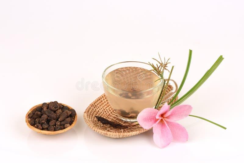 Nussgras, Coco bedecken Cyperus rotundus L mit Gras Tee für Gesundheit stockfoto