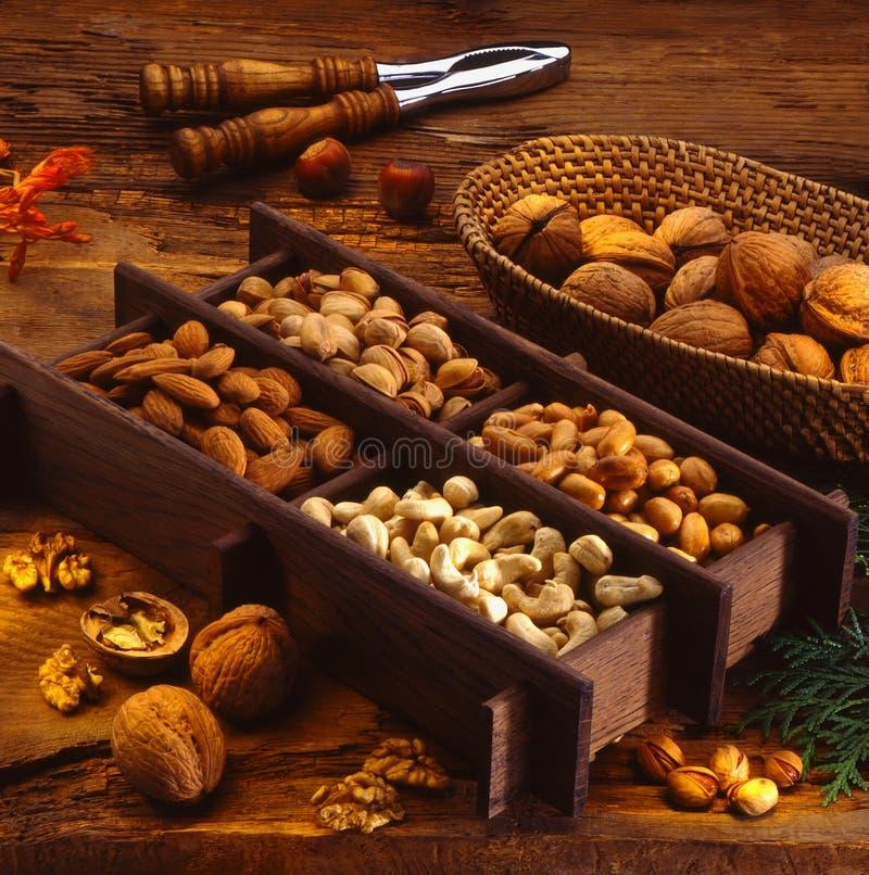 Free Nut Stock Photo - 11309140