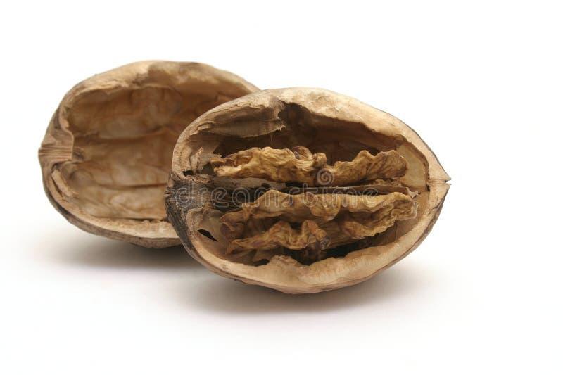 Nut 2 stock photos