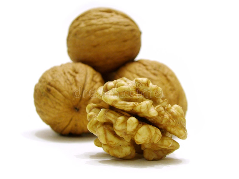 Nut royalty free stock photo