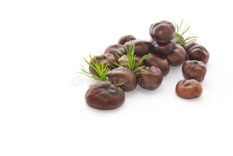 Nut of a chestnut stock images