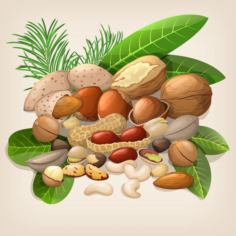 Nut collection with raw food mix. Vector illustration royalty free illustration