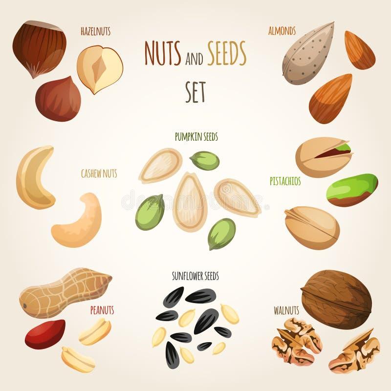 Nut mix set. Nuts and seeds mix decorative elements set vector illustration royalty free illustration