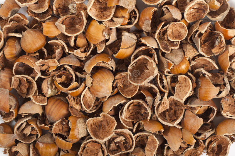 Nut Shells Royalty Free Stock Images