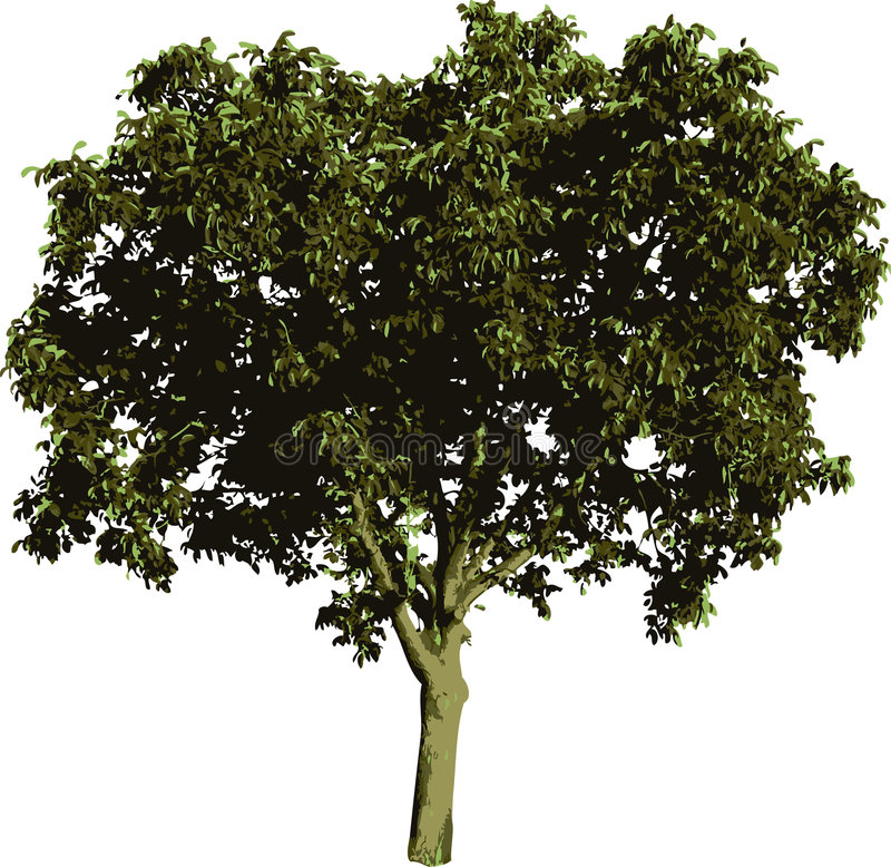 Nut Tree Stock Images